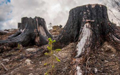 Ett år efter skogsbranden i Västmanland